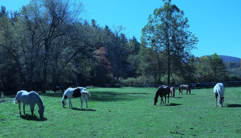 Falling Creek camp Horses in Upper Green River Pasture