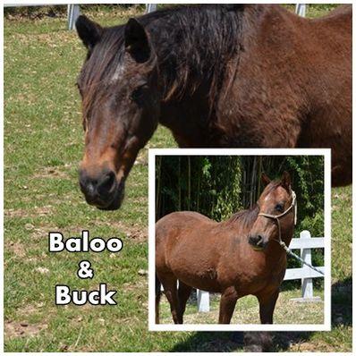 Baloo and Buck