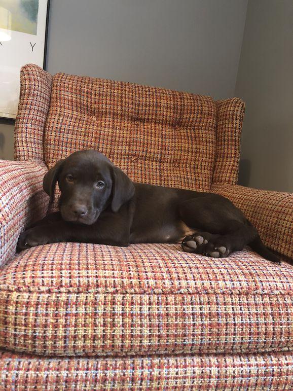 Hi, I'm the newest camp dog, Rucker!