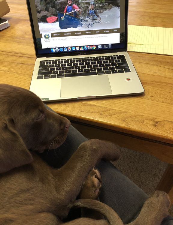 Working in the camp office is ruff!